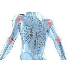 Sistema óseo y articular