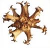 Harpagofito, la planta más eficaz para la artrosis