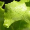 Los beneficios del ácido fólico en la salud