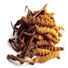 Principales propiedades del Cordyceps