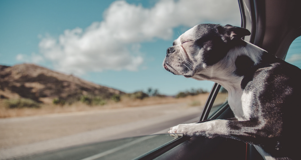 viajar en coche con perro,dia mundial del perro,como calmar a tu perro,productos naturales para calmar a tu perro,herbolario online,cosmética natural,tratamientos naturales