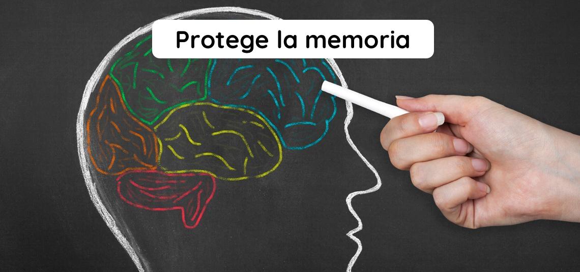 memoria,despistes,edad,cerebro,neurona,concentración,atención,aprendizaje,ginkgo,bacopa,salvia,herbolario online,cosmética natural,tratamientos naturales,productos naturales