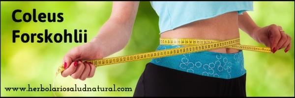 coleus forskohlii,adelgazar,perder peso,quemagrasas,herbolario online,cosmética natural,tratamientos naturales,productos naturales