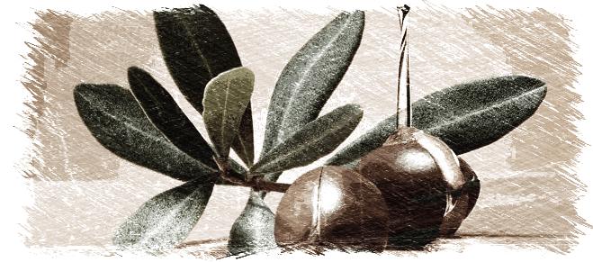 argan,aceite de argan,acidos grasos,piel,cabello,envejecimiento,herbolario online,cosmética natural,tratamientos naturales,productos naturales