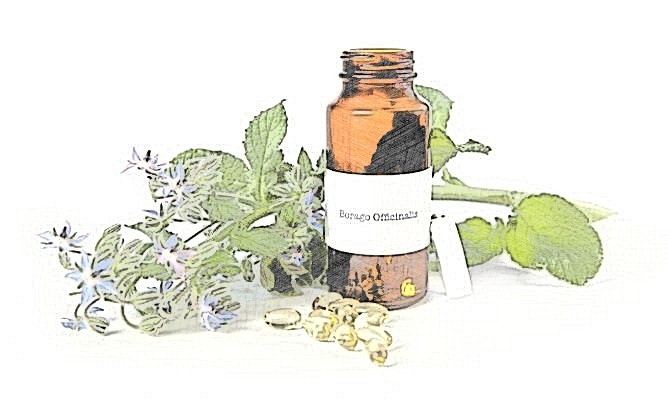 borraja,ácidos grasas esenciales,omega 6,gla,ácido gammalinolénico,omega 3,síndrome prementrual,menstruación,herbolario online,cosmética natural,tratamientos naturales,productos naturales