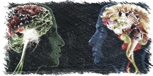 cerebro,neurotransmisores,neuronas,memoria,sistema nervioso,energía,omega 3,herbolario online,cosmética natural,tratamientos naturales,productos naturales