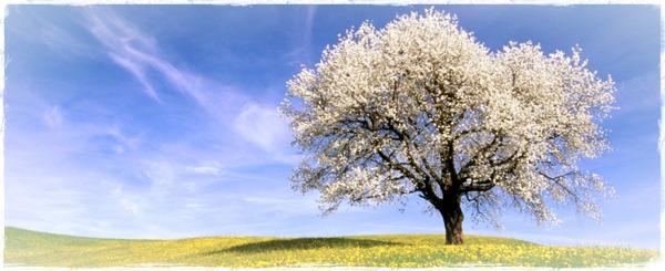 Astenia Primaveral | HerbolarioSaludnatural.com