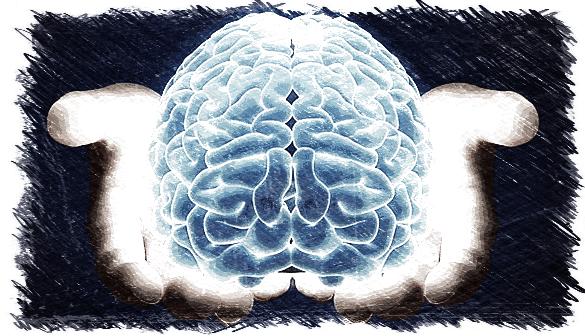 cerebro,fosfatidilserina,fosfatidilcolina,omega 3,memoria,DHA, EPA,herbolario online,cosmética natural,tratamientos naturales,productos naturales