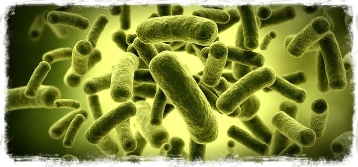 prebióticos,probióticos,flora intestinal, sistema inmunológico, diarreas, alergias, herbolario online,cosmética natural,tratamientos naturales,productos naturales