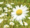 7 trucos para combatir la astenia primaveral