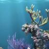 Beneficios del colágeno de origen marino