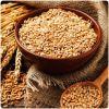 Germen de Trigo: el aliado antioxidante