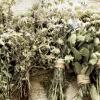 La importancia de mantener el aire limpio en el Herbolario