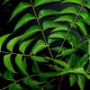 Conoce el aceite de neem y sus propiedades para la piel y el cabello