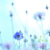 4 cosas que puedes hacer para el cuidado del hígado esta primavera