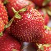 ¿Cuáles son los alimentos sanos con mayor cantidad de antioxidantes?