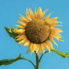 20 alimentos ricos en vitamina E y por qué es importante consumirlos