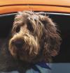 Consejos para viajar con perro en coche (con toda tranquilidad)